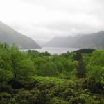 Bergen-økolandsby-Skog